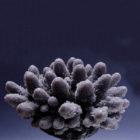 Коралл искусственный акропора медиум