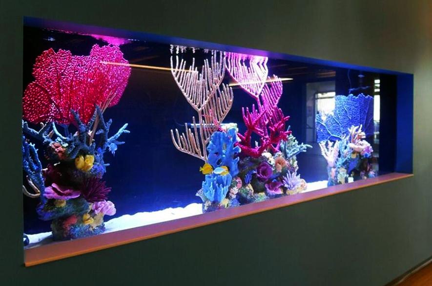 Кораллы в аквариуме фото