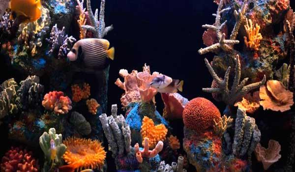 Фото коралловый риф в аквариуме