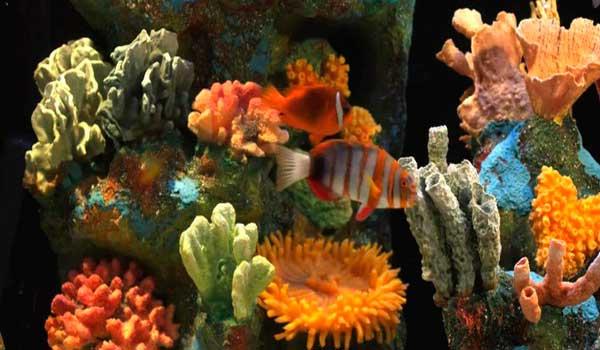 Фото кораллы в аквариуме