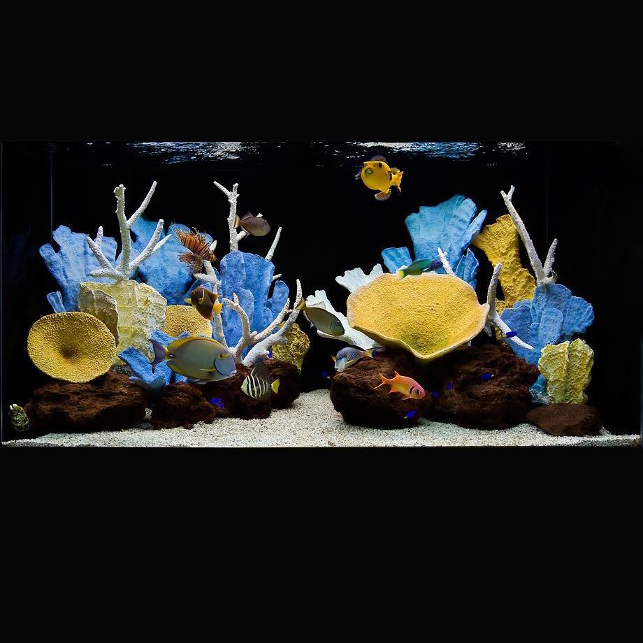 Кораллы как на фото купить в минске