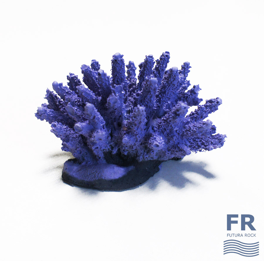 Мини коралл Акропора
