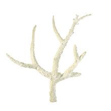 Ветвистый белый коралл