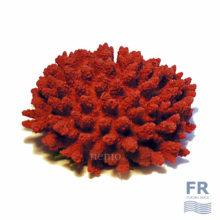 красный коралл для аквариума