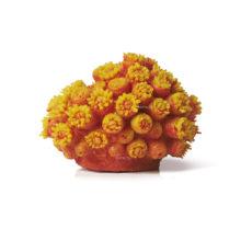 Коралл апельсин