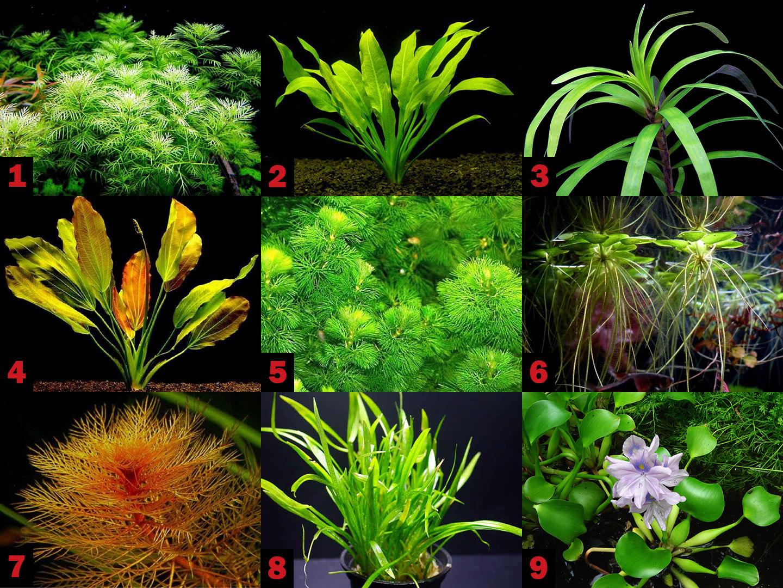 Аквариумные растения амазонки