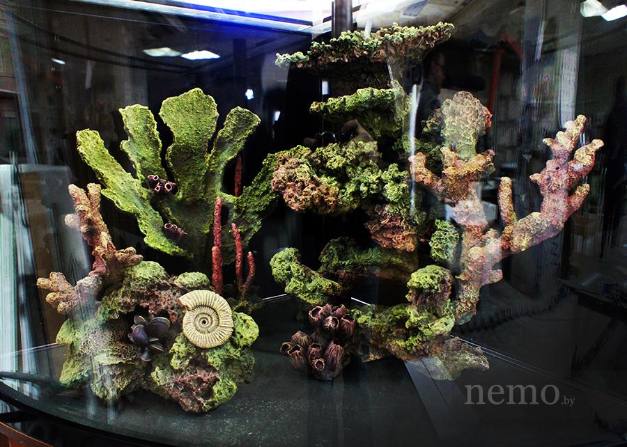 Псевдоморе в угловом аквариуме