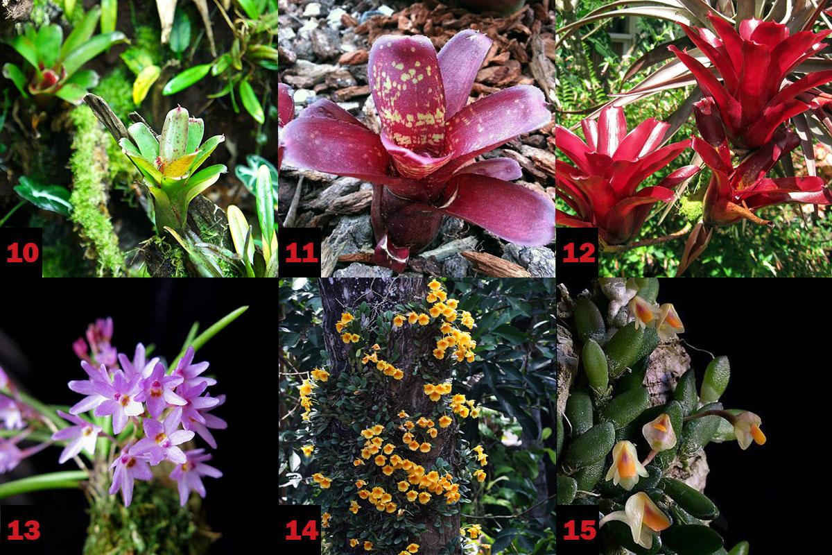 Орхидеи и бромелиевые