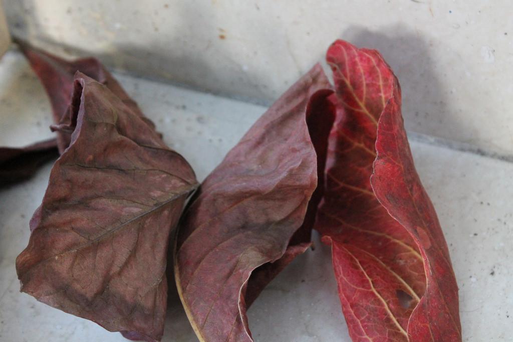 Листья миндаля в аквариуме
