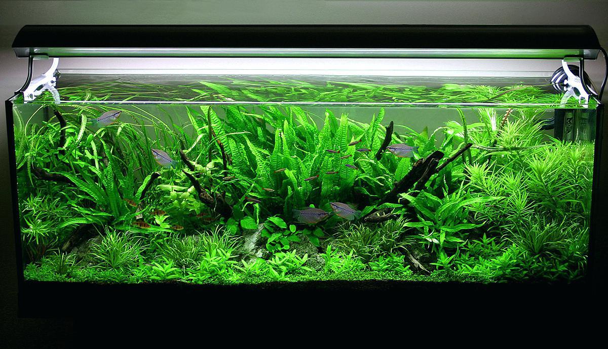 Сделайте ваш аквариум успешным!
