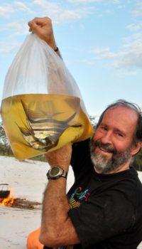 цена аквариумных рыбок