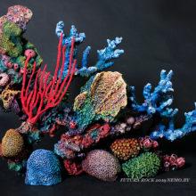 Коралловый риф премиум