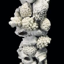 Reef Futura Rock